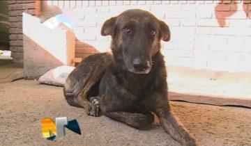 Верный пес преодолел 160 километров, чтобы найти людей, которые её когда-то спасли