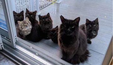 Бездомная кошка безошибочно определила, кому доверить своих маленьких котят