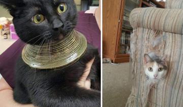 Котики, которые играли и…внезапно проиграли. 10 смешных фото-историй