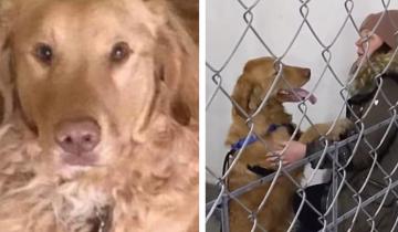 Собака потерялась в лесу – и вернулась через год домой