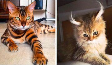 Топ 10 самых роскошных кошек на планете Земля