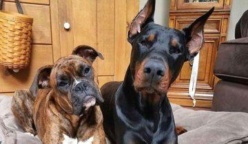 Топ-10 пород собак, которые не созданы для дома