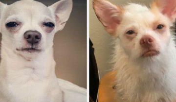 Собака-осуждака: 10+ фотографий песиков, которые явно не одобряют действия хозяев
