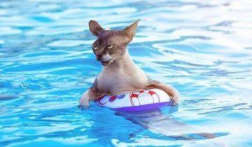Реакция котиков, которые в первый раз увидели море