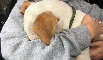 Испуганный щенок спрятал мордочку в руках спасительницы