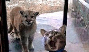 Грустите? Эти котики повеселят вас