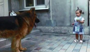 Дочь спасла большого пса с рынка, которого никто не любил, а он хотел жить и любить как и все.