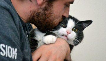 Не целуйте их! Человеческие нежности оскорбляют котов