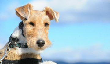 Топ 5 пород собак, которые обладают крепким здоровьем и хорошим иммунитетом