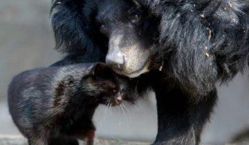 Медведица и кошка: чем завершилась незаурядная дружба длиною 10 лет
