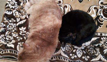Кошка Гречка, кот Иосиф и собака Малька — дружная компания
