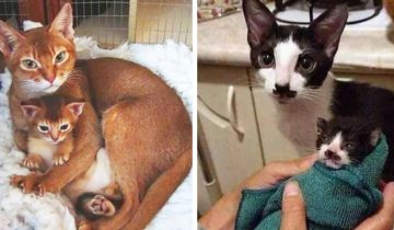 Котята, которые до последнего пятнышка выглядят точь в точь как их родители