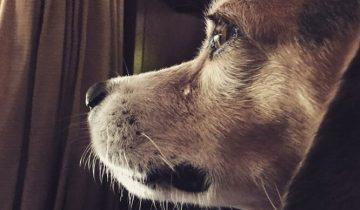Собака-потеряшка 8 лет искала родной дом. Увидев хозяина, она зарыдала