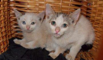2 котёнка очутились на стройке. Добрый мужчина решил спасти их