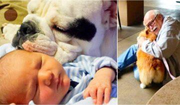 15 фото доказательств того, что любовь наших животных не имеет границ