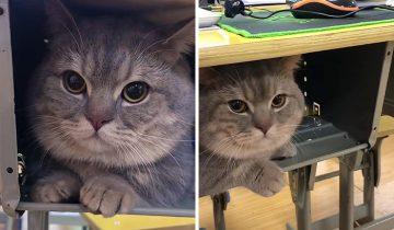 Студентка тайно пронесла на пары кота, потому что он не хотел оставаться один дома