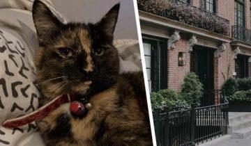 Ки-Ки заставляет краснеть хозяйку. А как иначе, когда хобби кошки лишает соседей святого