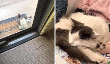 Подборка счастливых историй спасения котиков: до и после!
