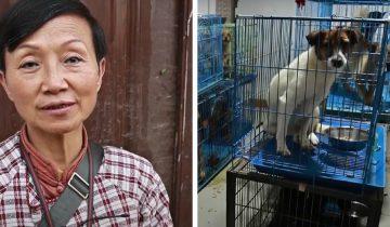 Женщина из Китая взяла щенка и не смогла остановиться. Теперь у нее 1300 собак