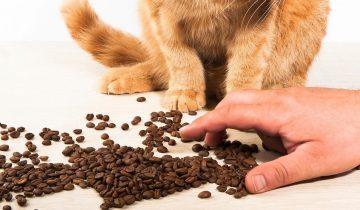 «А ты, уверен что меня покормил?»: 10+ котов, лишивших владельцев завтрака