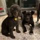 Сбежавшая собака спустя год встретилась со своей хозяйкой, и эта встреча достойна Оскара