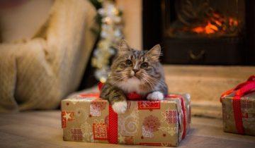 Владельцам кошек: заботимся о безопасности питомцев в новогодние праздники
