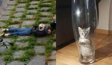 14 смешных доказательств, что котики любят странные места для отдыха