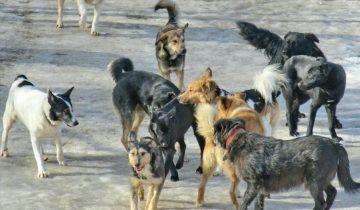 Что нужно делать, если вам навстречу бежит свора лающих собак