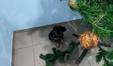 Маленький щенок ждал своего спасителя под новогодней ёлкой. Но никто не спешил на помощь