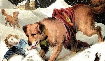 История собаки, которая спасла 40 человеческих жизней