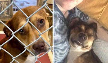 10 собак до и после того, как их взяли в дом, и жизнь наконец-то перестала быть собачьей