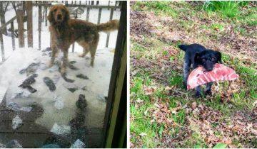 Гарантия крутого настроения: 12 фото милых и очень смешных собачек