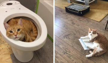 12 фото котов, которые будут спать где угодно, но не на лежанках