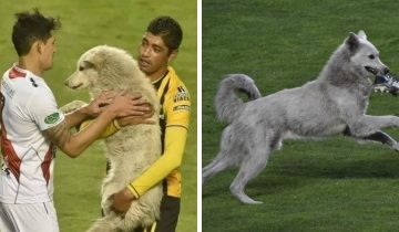 В Боливии пёс выбежал на поле во время матча и украл бутсу футболиста