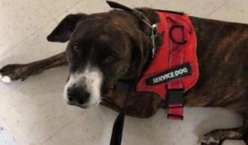 Собака взбунтовалась на прогулке и стала тянуть хозяйку. И случайно спасла ей жизнь