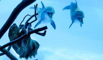 Удивительная реакция дельфинов на ленивца: вот это встреча!