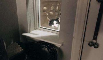Настойчивый котик преследовал девушку пару дней и хотел проникнуть в ее дом