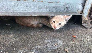 Котик был так напуган, что неделями не вылезал из узкой щели