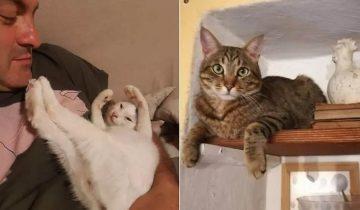 В Италии котики спасли семью от оползня