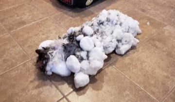 В клинике спасли котика, который едва не замерз в снегу