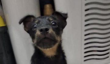 Под лавкой на морозе скулил двухмесячный щенок, мечтая о тепле