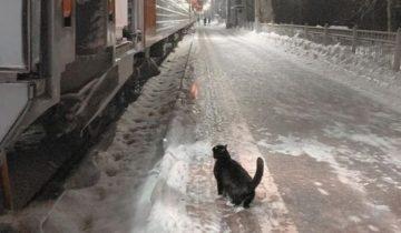 Каждый вечер в 22:40 котик приходит на перрон и ждёт прибытия поезда…