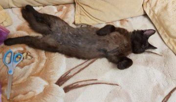 Котёнок с выбитыми зубами и брошенный на дачах кот случайно встретили спасителя