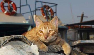 Кошка 3 недели ела только конфеты, пока ехала в контейнере из Украины в Израиль