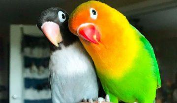 Яркий попугай и его подружка стали родителями. Малыши оказались прелестью