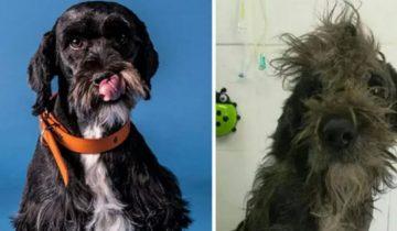 Фото бездомных собак до и после их спасения убеждают нас, что любовь — сила