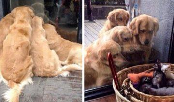 10 забавных доказательств, что нет лучше собаки, чем ретривер или лабрадор