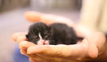 Маленький котенок чудом спасся из ловушки и обрел большого друга