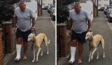Хозяин потратил $400 и узнал, что собака хромает не из-за того, что больна