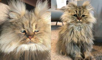 Пушистый кот с хмурым взглядом покорил людей